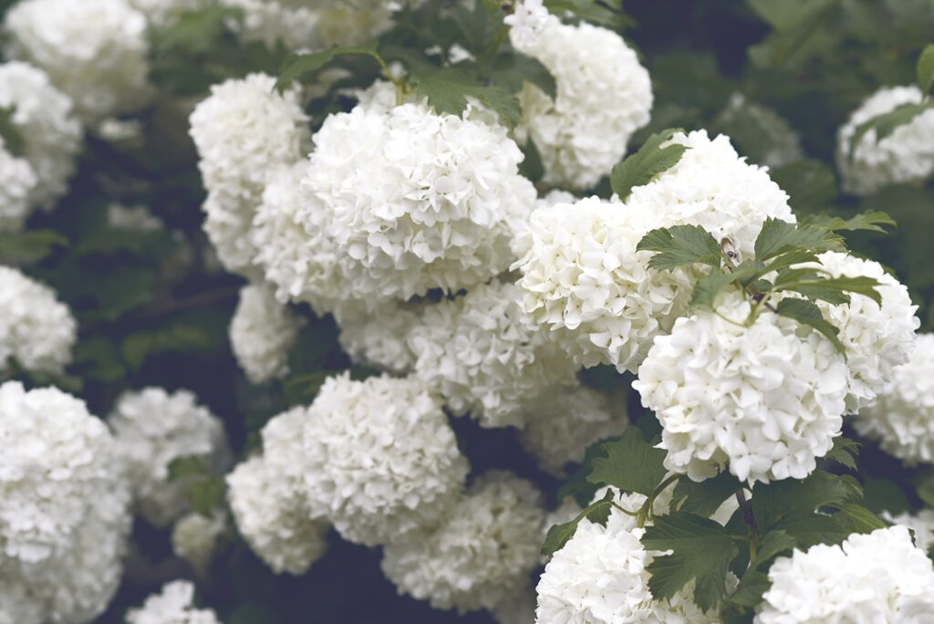 5 Plants To Get If You Want A Colourful Garden